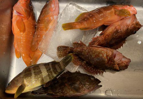 ゴールデンウィークも新鮮地魚!