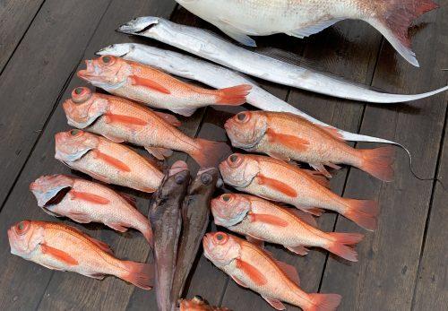 本日もとれたて高級魚ノドグロあります!